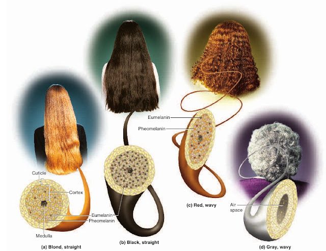 Hair Introduction What Skin Wants