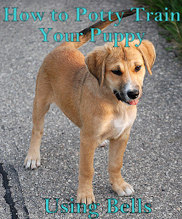 how to train your zoomer puppy
