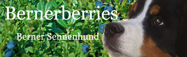 Bernerberries