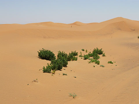 http://2.bp.blogspot.com/-jes6IbXdo3s/UMAmip-B8RI/AAAAAAAAADc/bHp6I9LsmgA/s1600/Sahara-plants.jpg