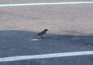 bird_in_parking_lot.jpg