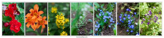 фотографии цветы