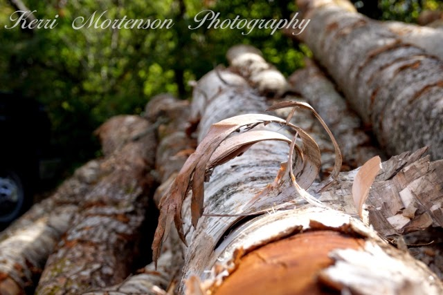 http://kerri-mortenson.artistwebsites.com/featured/birch-bark-curl-kerri-mortenson.html