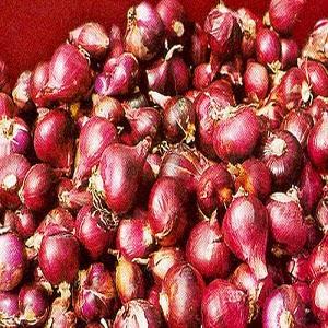 Syarat Tumbuh Tanaman Bawang Merah