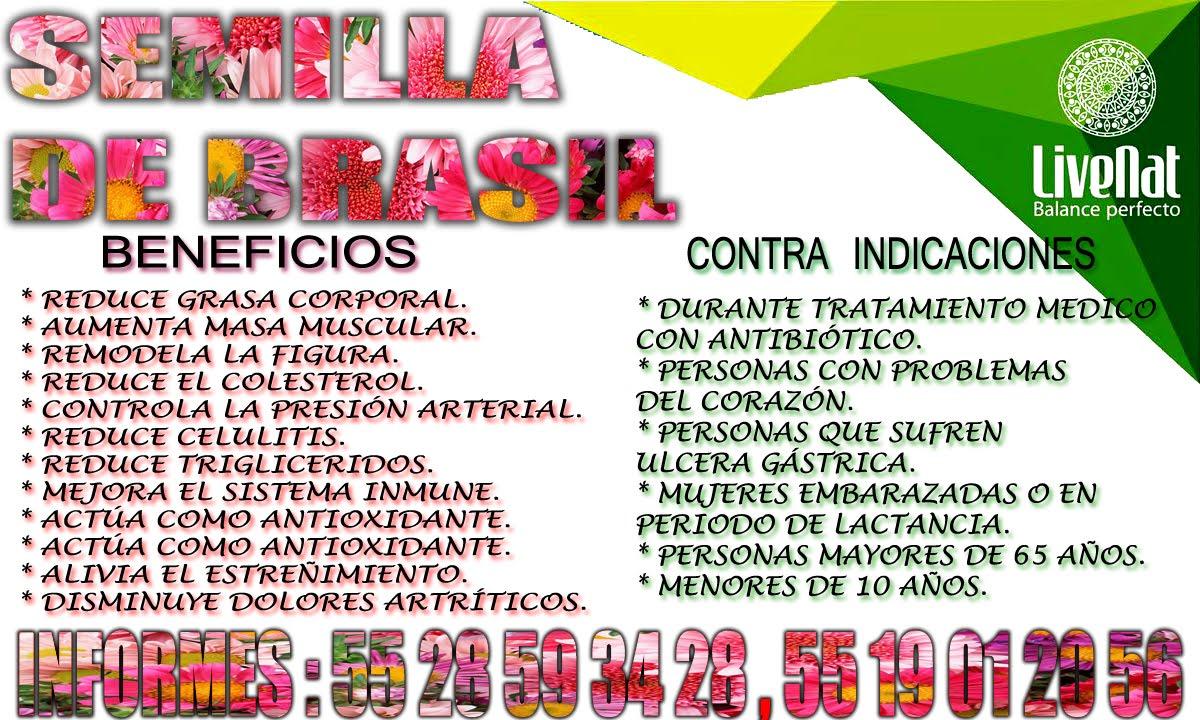 semilla de brasil cdmx