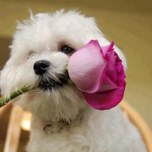 Gambar-Gambar Anjing Imut