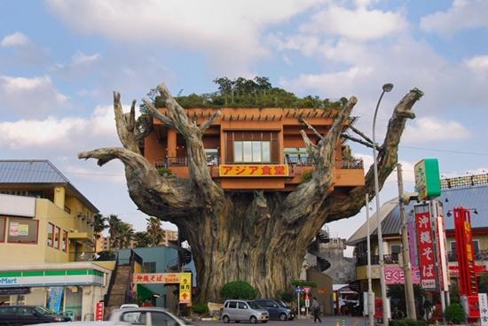 Restoran atas pokok di jepun