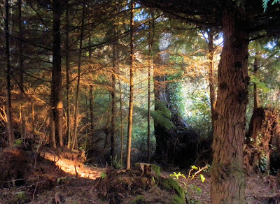 photo of forest in Rockaway Beach Oregon