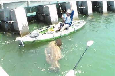 Americano fisga peixe enorme na Florida