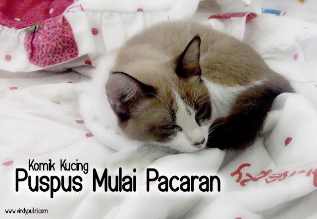 Komik Kucing - Puspus Mulai Pacaran