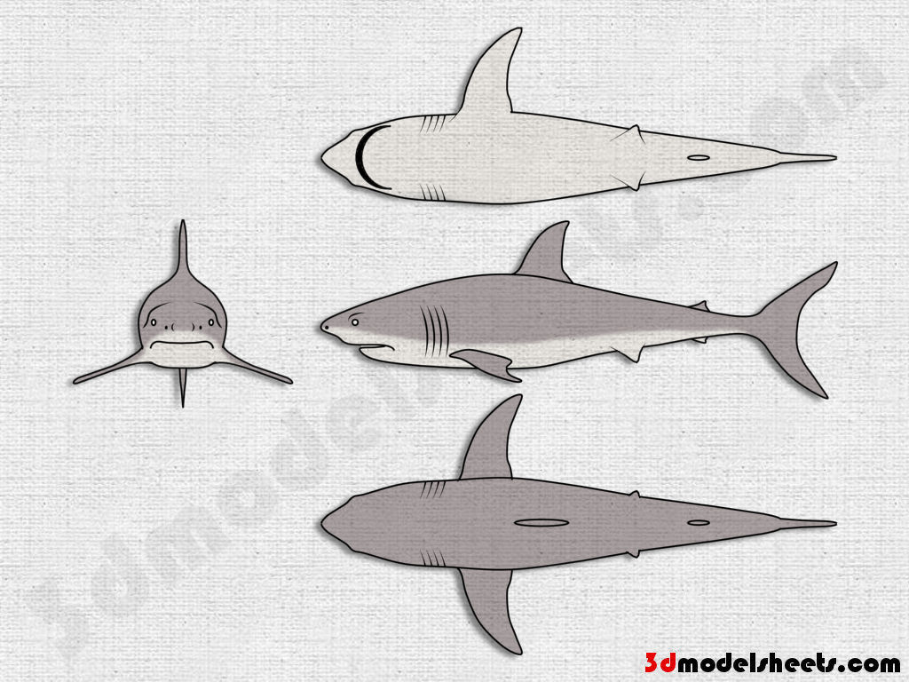High resolution seamless textures free animal blueprints model sheets shark blueprint malvernweather Image collections