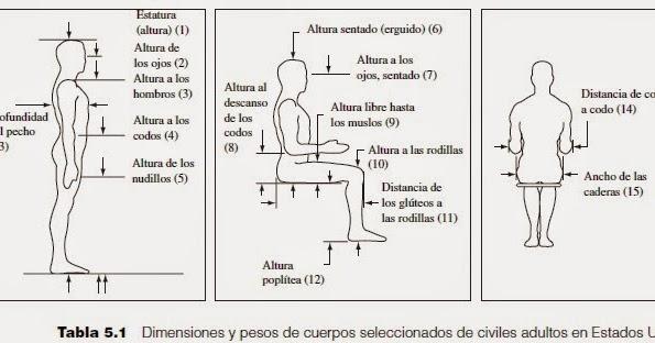 Antropometr a y dise o ingenieria de metodos for Antropometria mobiliario