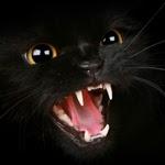 Les morsures de chat