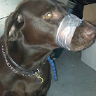 Florida, Connecticut Police investigate Facebook photo of duct-taped dog: UPDATE