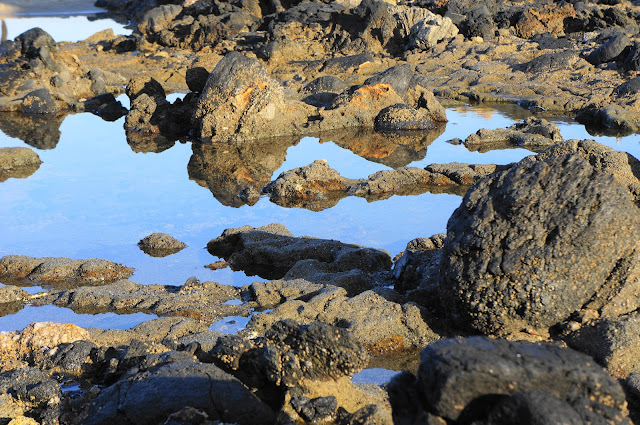 Tide pool Laguna, California