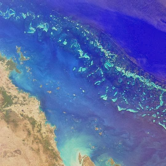 First deepwater fossil study reveals Great Barrier reef's past and future