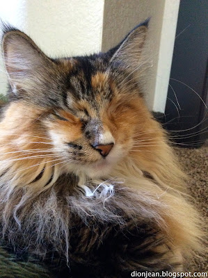 Lucy looks beautiful after her enucleation surgery