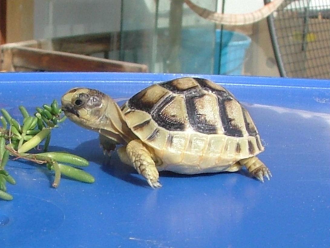 Acquario tartarughe terra : Mondo dei rettili: letargo delle tartarughe terrestri