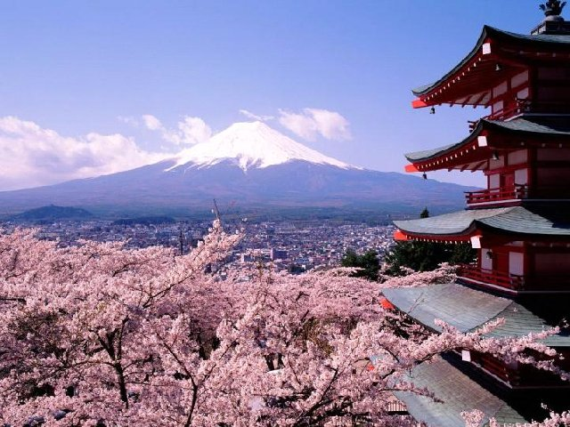 Sakura Japan Tour tourism 2015