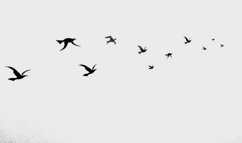 pássaros escritora de artes