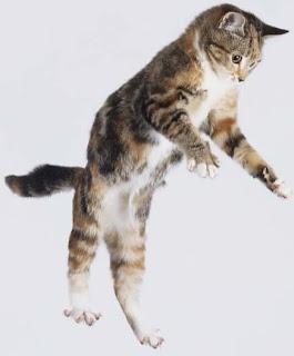 Info Suka Mengapa Kucing Tidak Mati Jatuh Dari Ketinggian