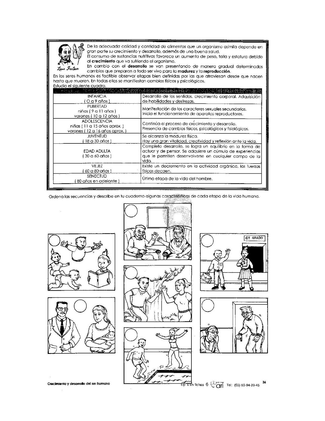 Ejercicio Etapas de la vida para niños