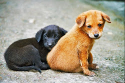 PÁGINA NO FACEBOOK DEDICADA Á AJUDA AOS ANIMAIS