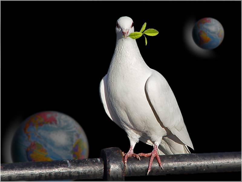 Oraciones por la Paz - oracionyreflexion.com.ar