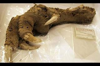 Uma equipe de paleontólogos da Imperial College, em Londres, afirmou ter encontrado restos de células sanguíneas e colágeno de dinossauros em fósseis com 75 milhões de anos de idade. Isso aconteceu acidentalmente, quando os especialistas estavam analisando esses fragmentos fósseis no Museu de História Natural, em Londres.