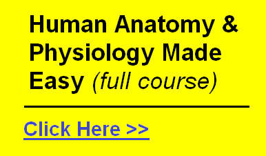 human anatomy and physiology course