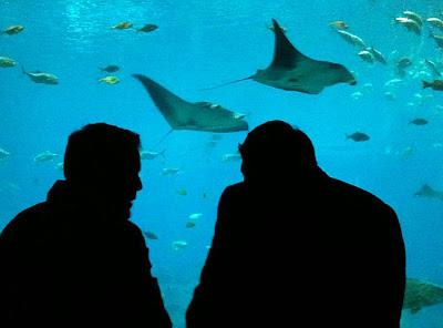 Silhouette, Georgia Aquarium