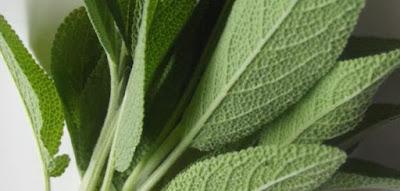 نبات الميرمية