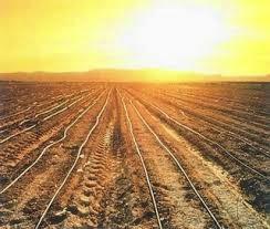 sumbangan pertanian tamadun china Sistem ekonomi tamadun india terbahagi kepada dua  yang pertama adalah system ekonomi sara diri menjelang zaman vedik, orang aryan memainkan peranan penting dalam perkembangan kegiatan pertanian dan penternakan.