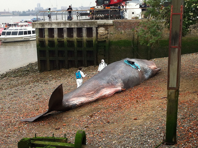 Beached Whale Art in Greenwich London