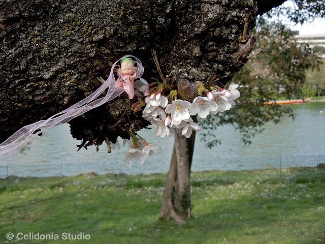 Fatina del Ciliegio in Fiore