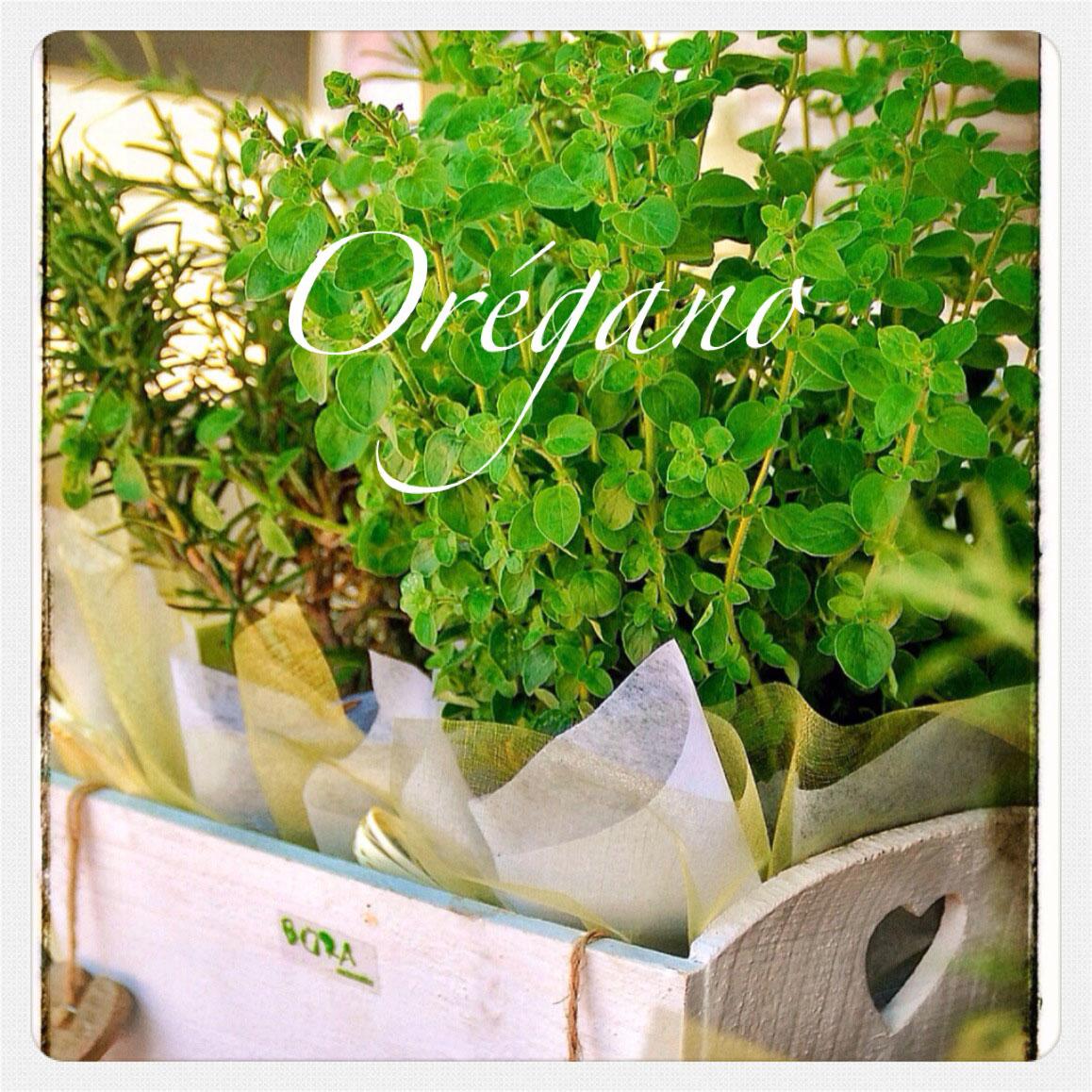 Bora dise o floral plantas arom ticas - Jardineria para principiantes ...