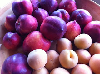Fresh nectarines and apricots