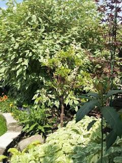 Suburban garden, backyard, suburbs