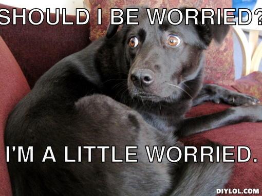 worried-dog-meme-generator-should-i-be-w