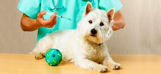 los amigos  Doenças do Cães Sintomas e Tratamento