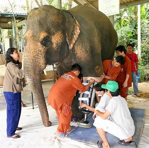 animales con el veterinario