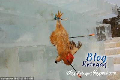 Tradisi panah ayam hidup-hidup di China