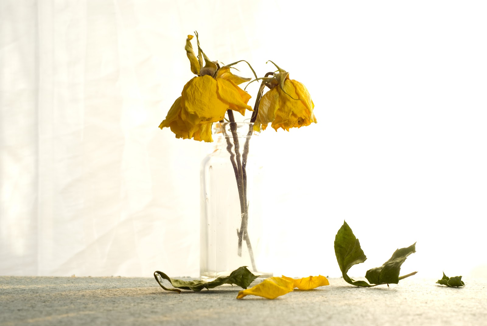 A Suburban Kitchen Backlit Dead Flowers