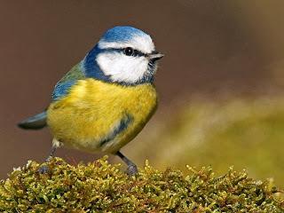 Το Μικρό Πουλί  693398__little-bird_p