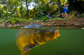 mancing ikan mas