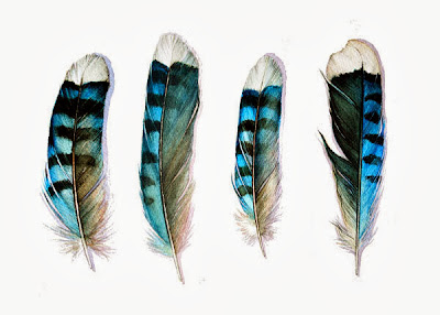 four blue jay feathers art card by jodyvanb on etsy