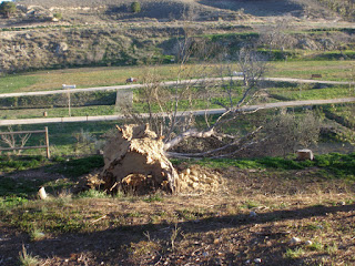 Parque de Valdegurriana árbol caído Zaragoza