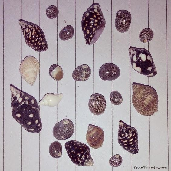 polka dot shells
