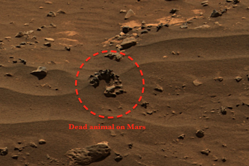 nasa life on mars rumor - photo #19