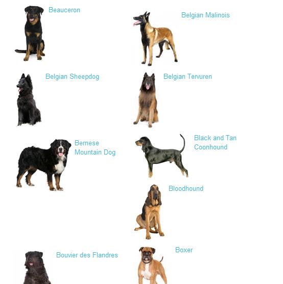 Extra Large Sized Dog Breeds
